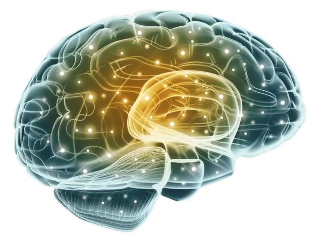 Durchleuchtetes Konsumentengehirn im Neuromarketing